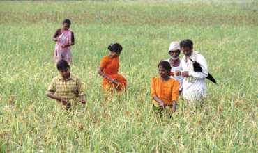 Rural family in their field harvesting crop. India. Photo: © John Isaac / World Bank