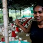 Adriana Banderas raises poultry as part of Bank-supported producer's alliance in La Eugenia, Valle de Cauca, Colombia. Photo: © Charlotte Kesl / World Bank