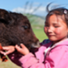 Mongolia: Development of Index-Based Livestock Insurance